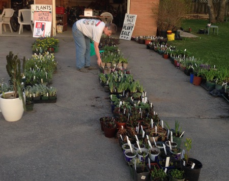 Mary watering  plants the night before sale
